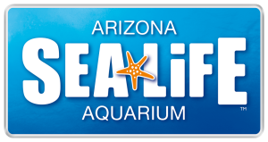Kansas City Photographer Videographer creates Video Project for SEA Life Arizona